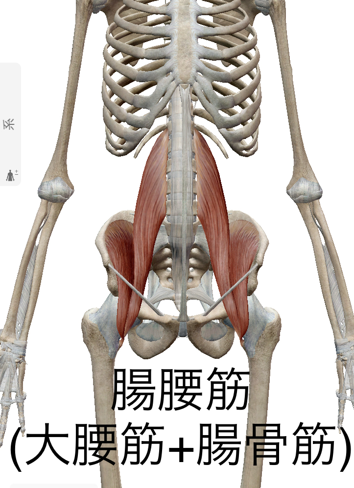 腸腰筋強化で腰痛軽減